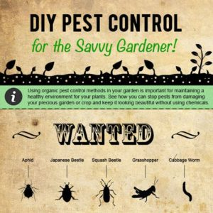 Pest Control Infographic Example